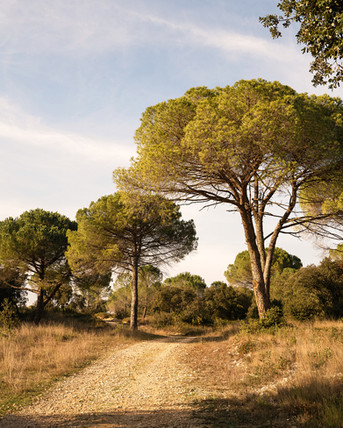 photographe-lifestyle-provence-ladoucesauvagerie-05