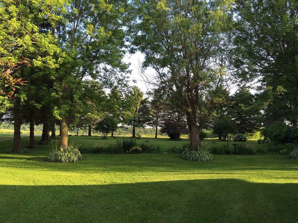 Trees in yard