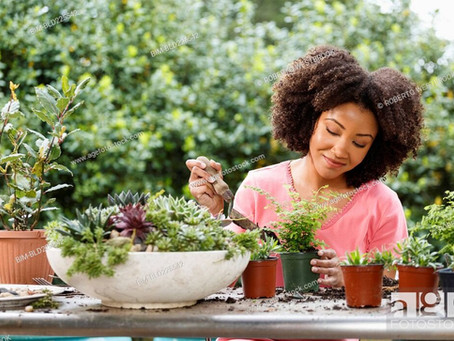 Grow healthy plants at home