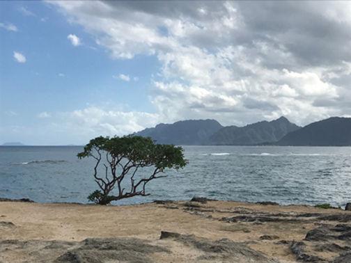 IHawii lone tree.jpg