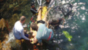 rescue_diver_prin NAUI.jpg