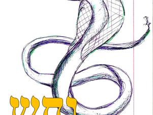 Почему змеи решительны и догадливы
