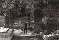 100 - Όλυμπος  1914.jpg