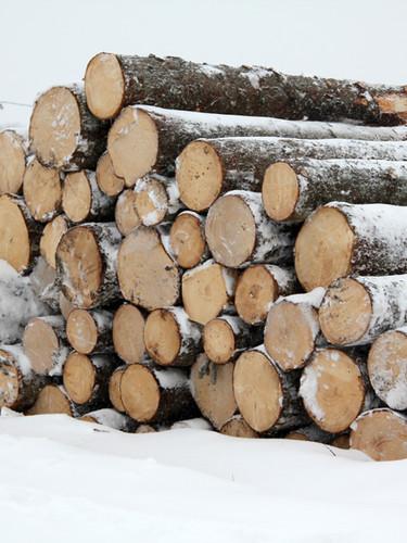 Spruce (whitewood) logs.