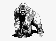952-9528757_564-x-772-15-gorilla-sketch.