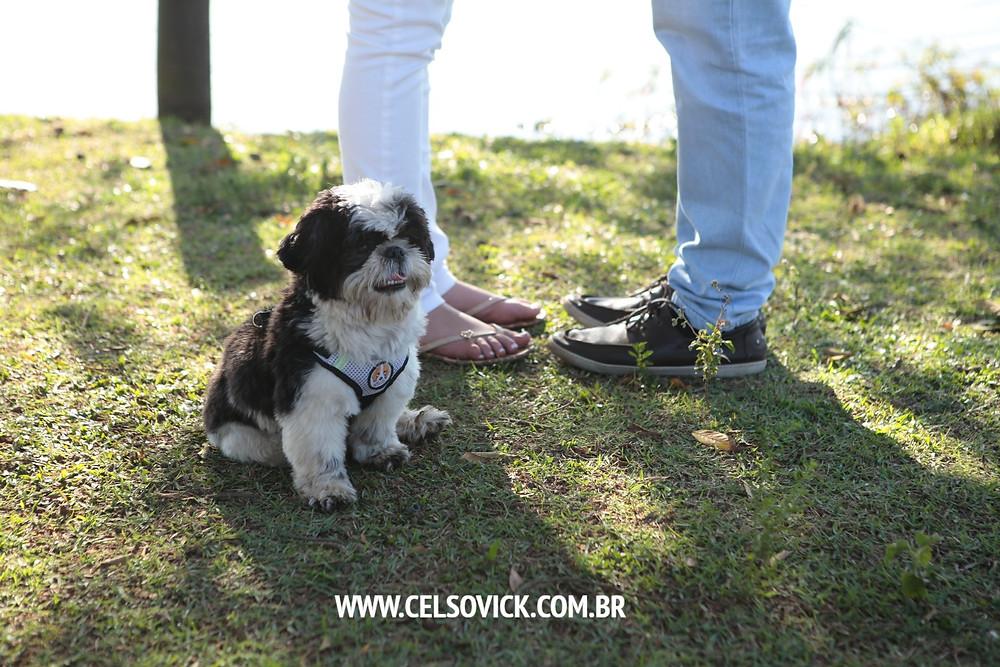 Cachorro no Ensaio fotográfico