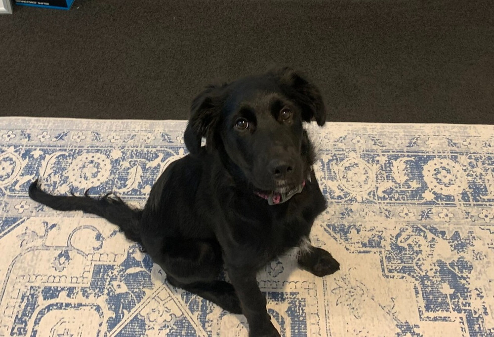 Insurely dog Bailey - An Office Dog is  Good Idea...sometimes