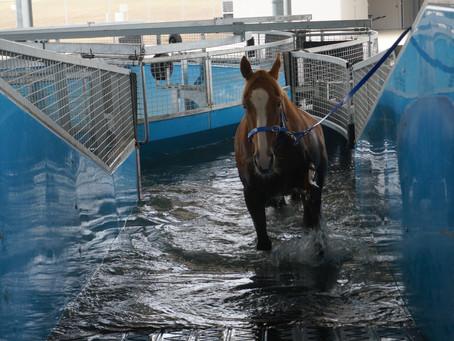 Insights: Training in a Water Walker