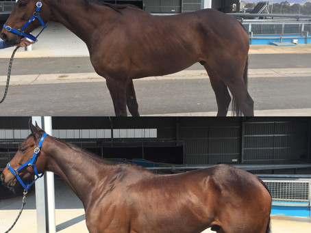 Condition or Weight Gain forLight Horses