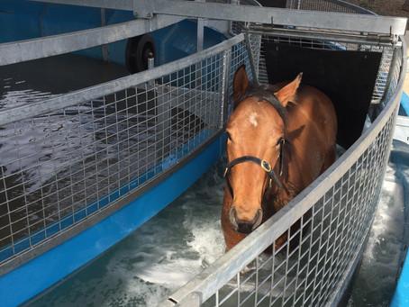 Managing Arthritis inyour Horse