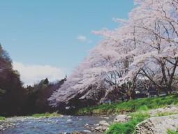r015/4月/桜