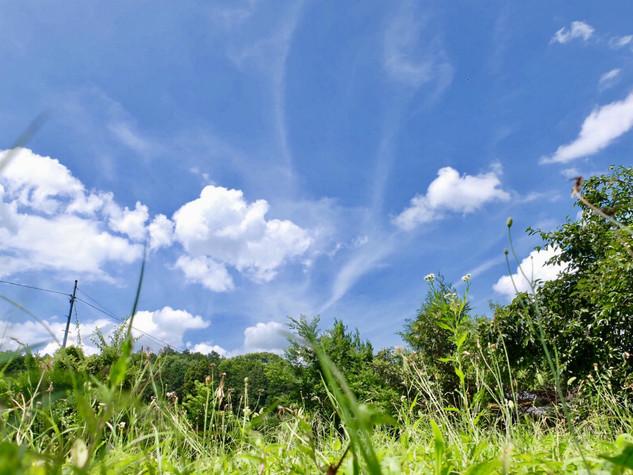 h011/畑/夏