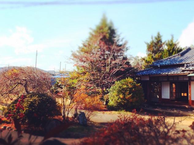 n029/中庭/冬