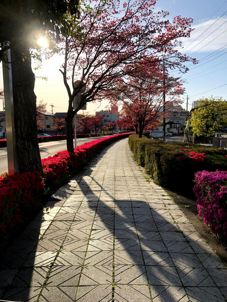 Columbus street in spring