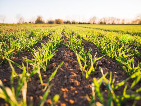 ORGANIC FARMING: THE TASTE OF SUCCESS