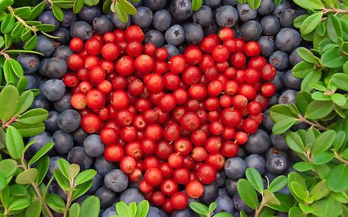 0-Blue-and-C-berries-1080x675.jpg