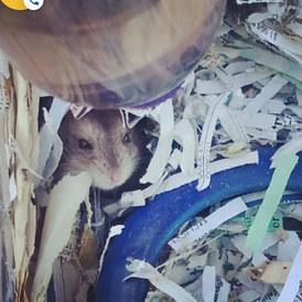 #hamsters.jpg