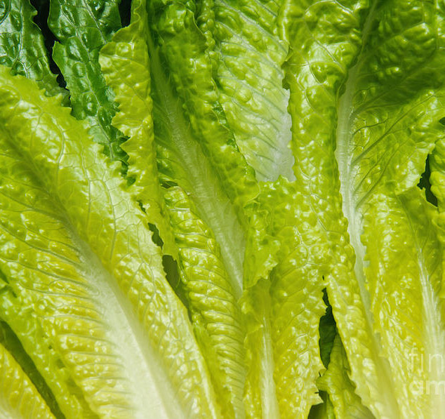 the-heart-of-romaine-andee-photography.j