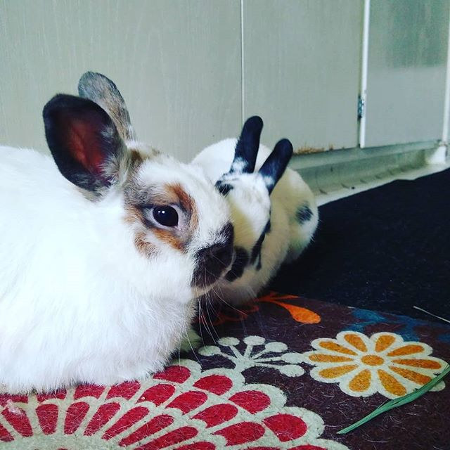 Bonding tiny bunnies #rabbitsofinstagram