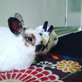 Bonding tiny bunnies #rabbitsofinstagram