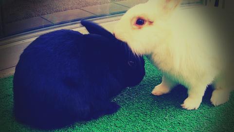 Vivir con alergia a los conejos