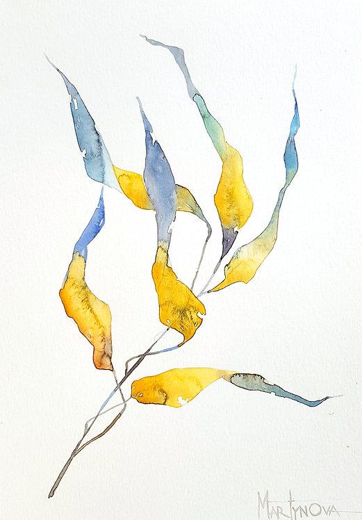 Herbal   Gold #2