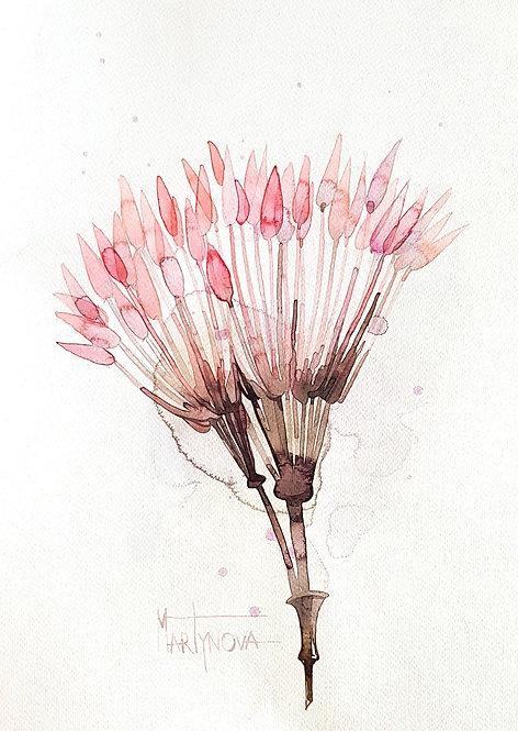 Pink #1