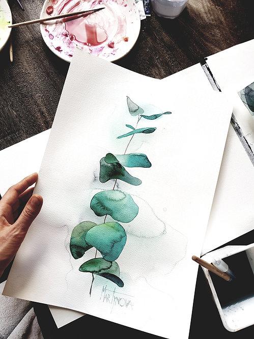 Herbal | eucalyptus # 5
