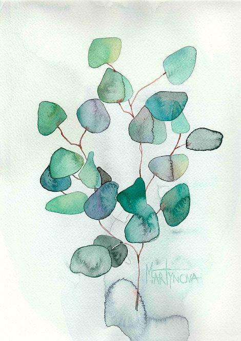 Herbal   Eucaliptus #13