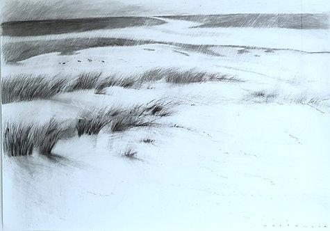 Beach dunes #104