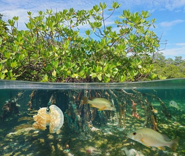 Modelling the effects of coastal vegetation