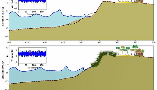 Mike_XBeach_dune vegetation modelling.PN