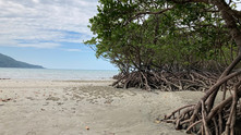 Modelling mangroves as coastal protection