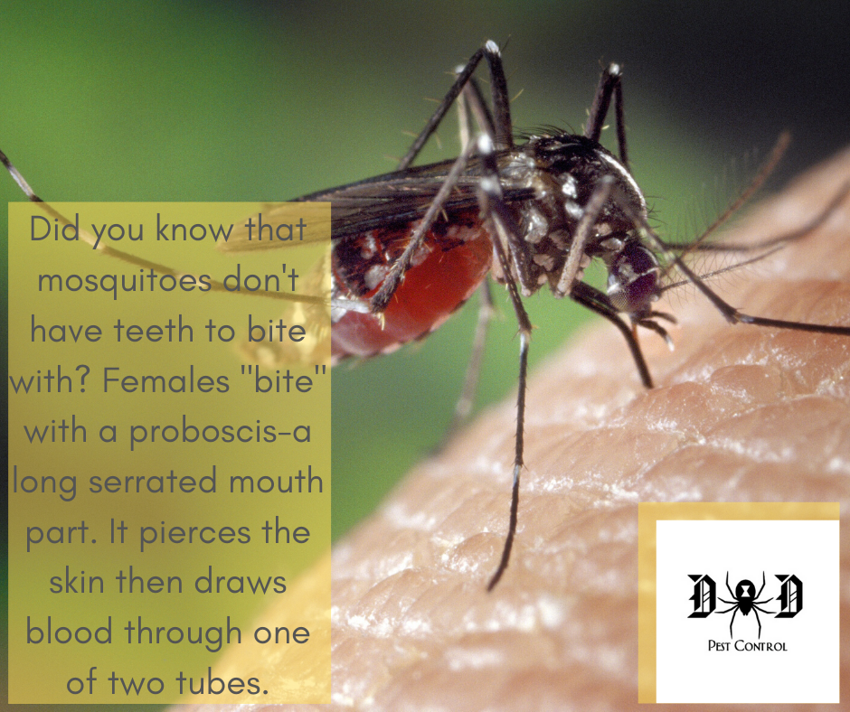 mosquito ad 4.png