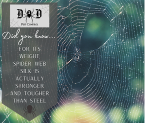 Spider Ad 1.png