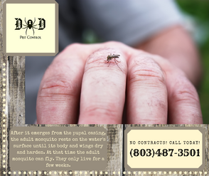 mosquito ad 7.png