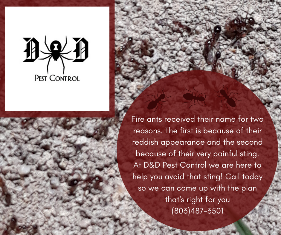 Fire Ant Ad 1.png