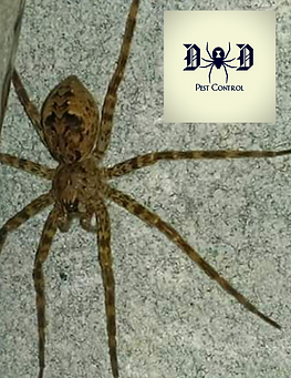 spider pic.png