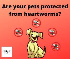 heartworm1.png