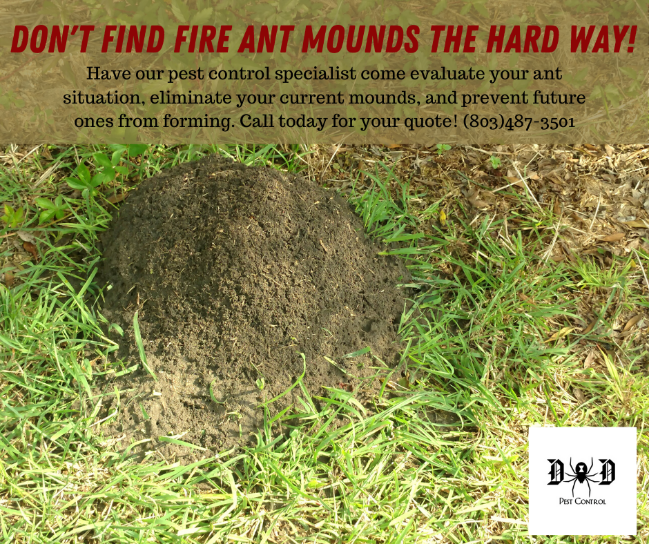 Fire Ant Ad 2.png
