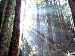shine_tree