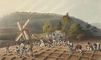 The trade in people: The slave trade in Africa and the West Indies