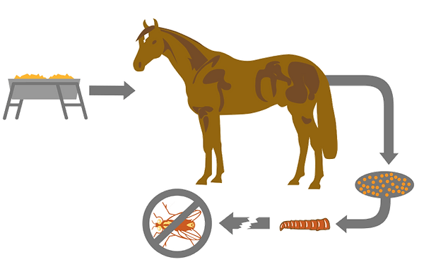 How Feed-Through Products Work for Horse