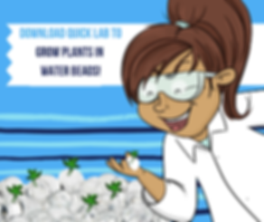 water bead labs (1).png