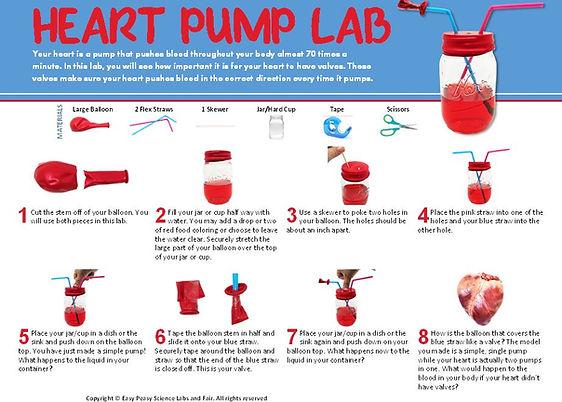 Heart Pump Lab.JPG
