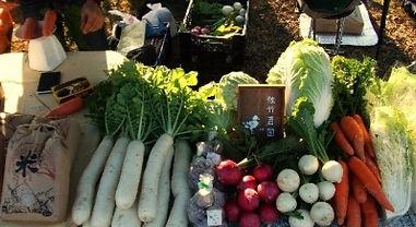 organic17.jpg