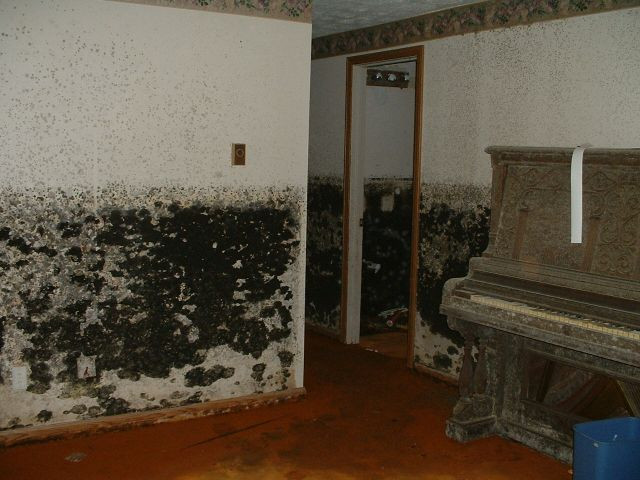 Mold Testing Air Quality Naples Fort Myers SWFL Home Inspections