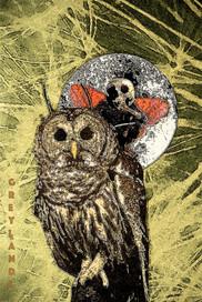 owl-fairy