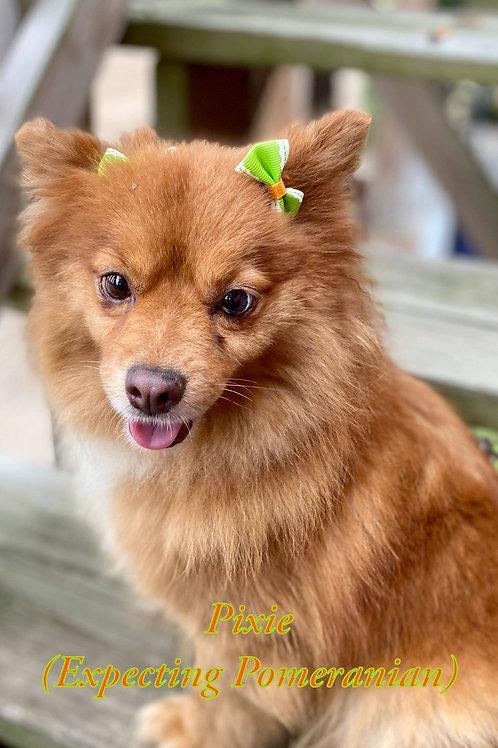 Pixie pup's $1150