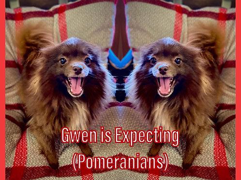 Gwen puppies $1500